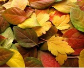 FallLeaves_thumb[3]
